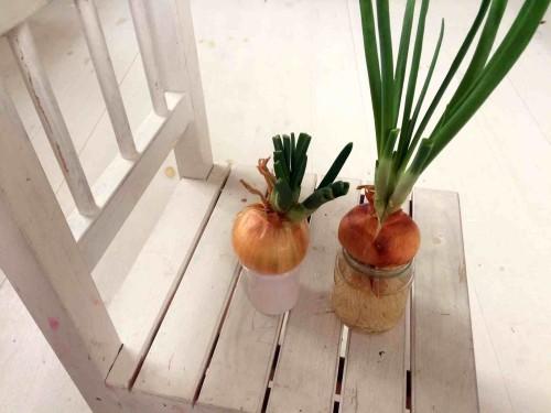 Beatos virtuve_svogunai_pavasaris